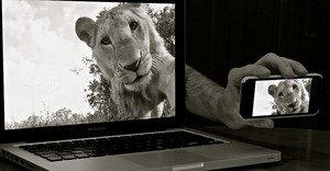 Selfie d'un lion